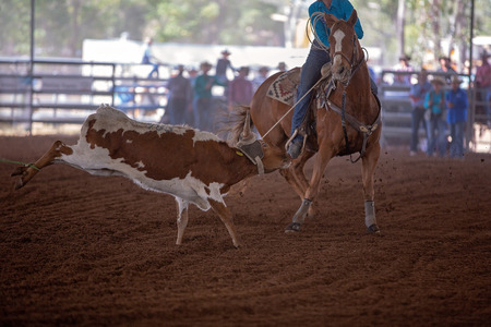 Calf roping event at a country rodeo with horse and rider