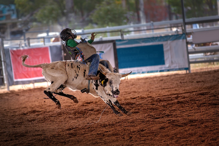 Young cowboy rides bucking bull steer at indoor country rodeo