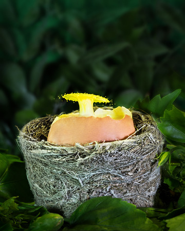 Liquid Drop Art - Water Drop Photography.  Yellow milk is dropped into an egg shell resting in a birds nest. Stockfoto