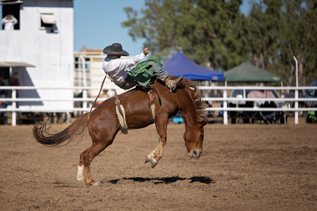 Cowboy rides a bucking horse in bareback bronc event at a country rodeo.