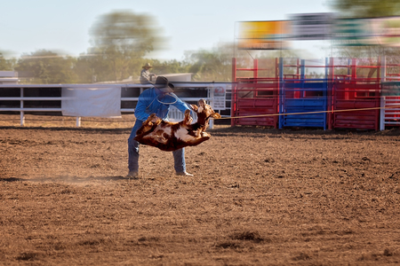 A cowboy tying a calf after he has lassoed it at a country rodeo in Australia Stock Photo