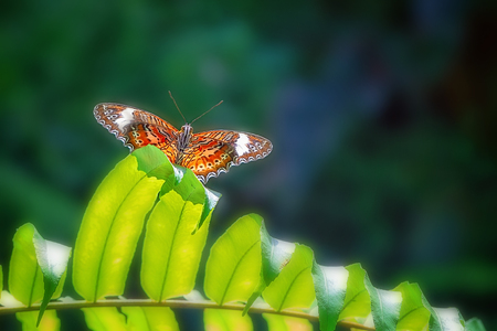 A Monarch butterfly sitting on a fern leaf against a colorful blue and green background