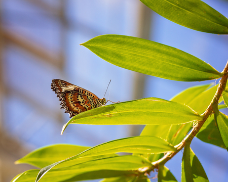 A Monarch butterfly alighted on a green plant in the garden
