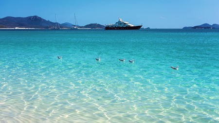 Seagulls swimming in front of tourist boats in the blue water of Whitehaven white silica sand beach in Whitsunday Islands Australia