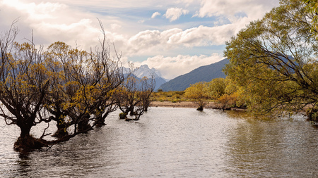 A row of spindly trees with autumn foliage growing in a lake, with mountain background and cloudy sky Stock fotó