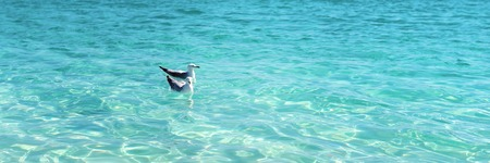 Two seagulls swimming peacefully in crystal clear ocean water