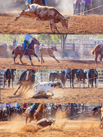 Collage of calves being lassoed in team calf roping events by cowboys at a country rodeo