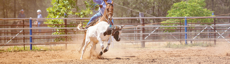 Horse riding cowboy lassoing a running calf in a rodeo roping competition in an Australian country town Stock Photo