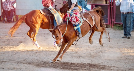 Bucking bronc horse riding competition entertainment at country rodeo Reklamní fotografie