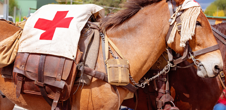 A first aid donkey being led by a rider of the Australian light horse brigade