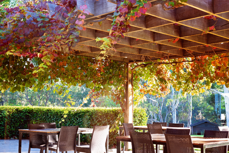 Grape vines hanging from a trellis above outdoor tables and chairs at a vineyard restaurant in Australia