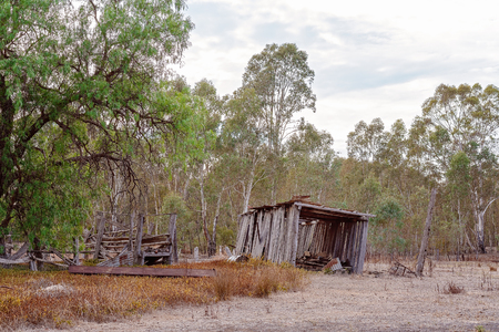 An old timber slab shed tipping to one side as it slowly falls over in the Australian bush Фото со стока