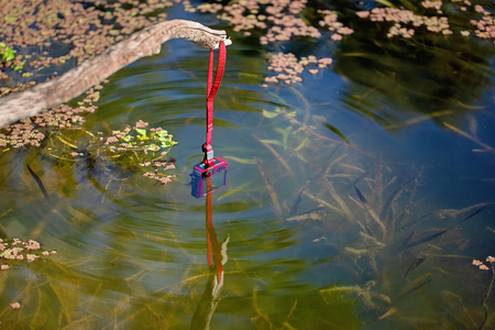 An underwater camera being held on a stick and dipped below the surface to capture algae