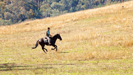 CORRYONG, VICTORIA, AUSTRALIA - APRIL 5TH 2019: The Man From Snowy River Bush Festival re-enactment, a rider on horseback gallops up a hill to chase wild horses on 5th April 2019 during the re-enactme 에디토리얼
