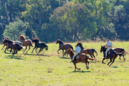 CORRYONG, VICTORIA, AUSTRALIA - APRIL 5TH 2019: The Man From Snowy River Bush Festival re-enactment, riders on horseback chase wild horses on 5th April 2019 during the re-enactment of Banjo Pattersons epic poem.