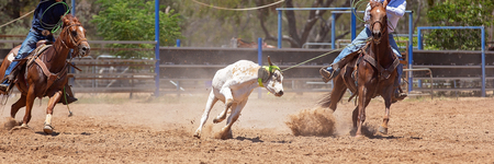 Team calf roping is a popular rodeo event, a sport sanctioned by Australian Team Roping Australia Stock Photo