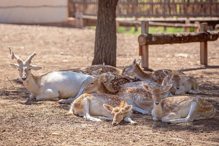 Un troupeau de cerfs se reposant à l'ombre après leur repas Banque d'images