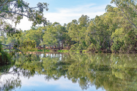 Tree reflections in the beautiful Goulburn River in country Victoria, Australia