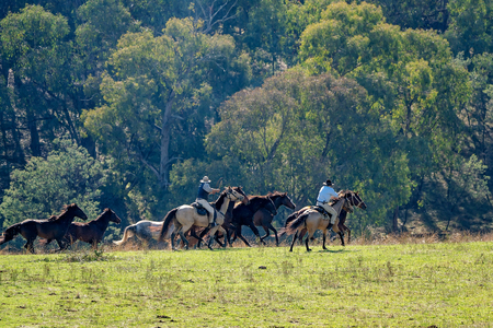 Horseback riders herding galloping wild horses in a stunningly beautiful Australian landscape 免版税图像
