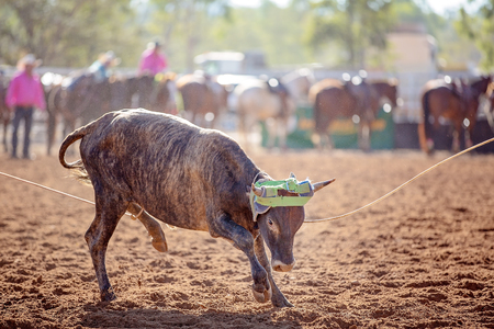 Team calf roping is a rodeo event sanctioned by the Australian Team Roping Association