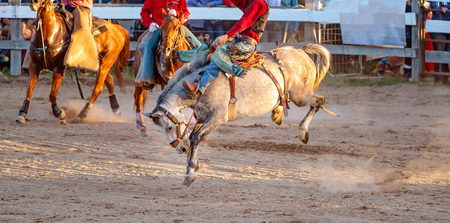 Cowboy rides a bucking bronc horse in a sanctioned competition event at an Australian country rodeo