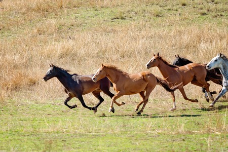 Magnificent wild horses racing across the valley plains in a beautiful countryside on a bright sunny day