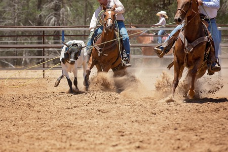 Men on horseback lassoing a running calf as a team in the calf roping sporting event at a country rodeo
