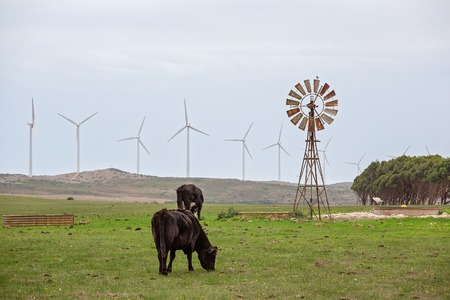 New wind powered turbines on the horizon in contrast to an old windmill with cows grazing in a paddock, Australia