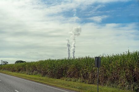 The smoke from an Australian sugar mill factory rising into the atmosphere above a crop of sugar cane growing by the side of the road