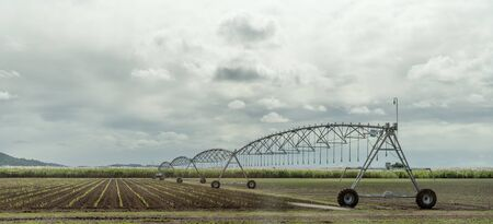 A center-pivot irrigation system watering a crop of growing sugar cane in a large field in Australia