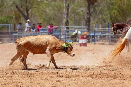 Cowboys on horseback lassoing a calf in a dusty Australian outback country paddock Фото со стока