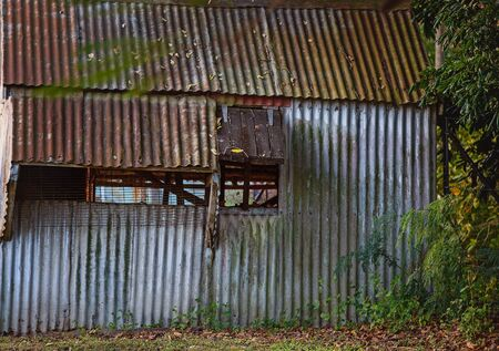 Derelict and rusted old country shed left to fall down and decay amongst surrounding bushland
