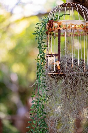 Old rusted decorative bird cage with growing air plant and plastic vine against a blurred green bushland backdrop
