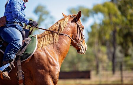 Close up of female equestrian and horse competing in barrel racing at outback country rodeo Stock Photo