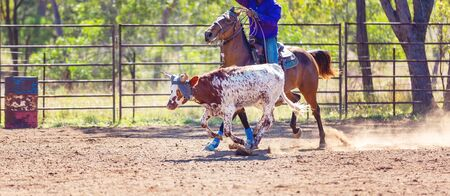 A running calf lassoed by cowboys in a dusty Australian outback country rodeo arena Imagens - 128283752