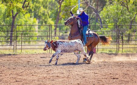 A running calf lassoed by cowboys in a dusty Australian outback country rodeo arena Imagens - 128283740