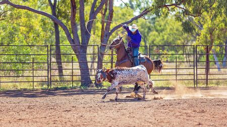 A running calf lassoed by cowboys in a dusty Australian outback country rodeo arena Imagens - 128283741