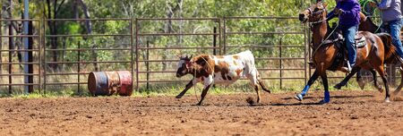 Calf being lassoed in a team calf roping event by cowboys at a country rodeo Imagens - 128283822