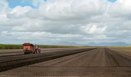 A farmer planting sugar cane in a plowed field on a sugarcane plantation Reklamní fotografie - 129924980