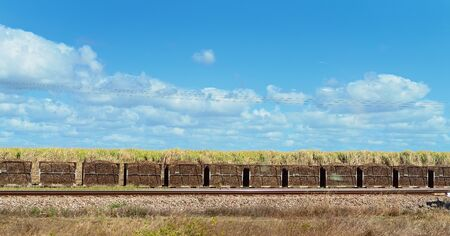 Harvested sugar cane in bins ready for transporting by rail to a refinery
