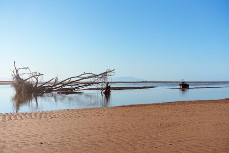 A large tree washed away by high ocean tides adrift at low water on the beach beside a small moored fishing boat