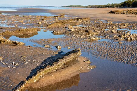 Rocks scabbed with crustacean shells on the beach at low tide