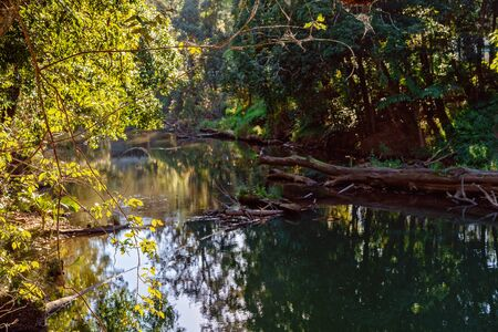 Calm water in a still river in tropical rainforest with the sun shining through the overhead leaves in late afternoon light