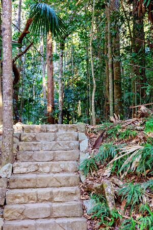 Stone steps on a walking track leading into lush tropical Australian rainforest
