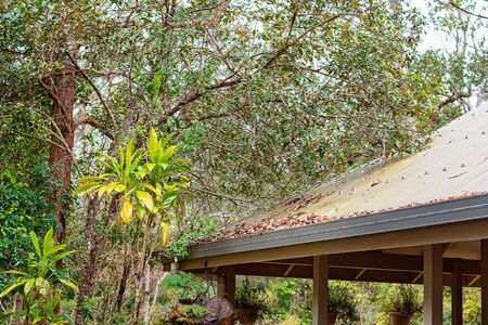 Dead fallen leaves piling up in the guttering of a building in a tropical rainforest, cleanup chore