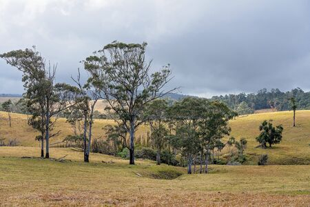 Rolling dales of dairy farm pasture in Australian hilly country at the top of a mountain range, the grass no longer green due to lack of rainfall Reklamní fotografie - 129925194