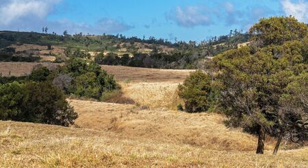 Rolling dales of dairy farm pasture in Australian hilly country at the top of a mountain range, the grass no longer green due to lack of rainfall Reklamní fotografie - 129925192
