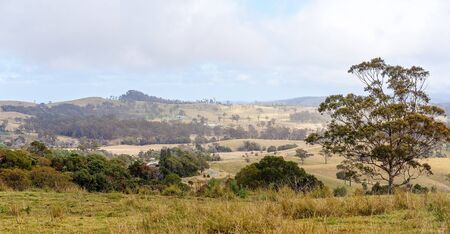 Rolling dales of dairy farm pasture in Australian hilly country at the top of a mountain range, the grass no longer green due to lack of rainfall Reklamní fotografie - 129925197