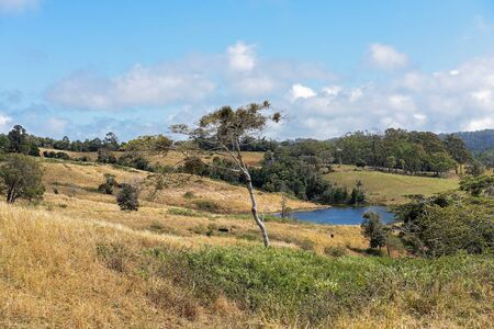 Rolling dales of dairy farm pasture with a small dam in the dry Australian countryside Reklamní fotografie