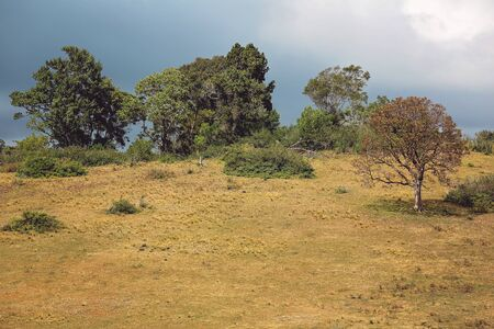 Dry pasture and trees on a hillside with a stormy sky in the background